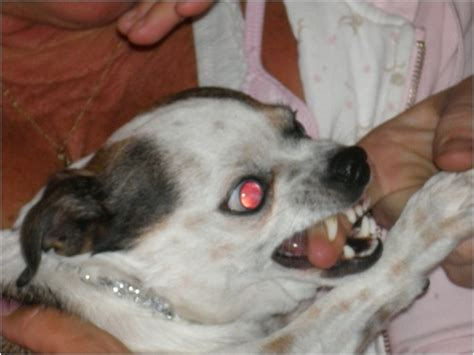 scary looking dogs scary looking www imgkid the image kid has it