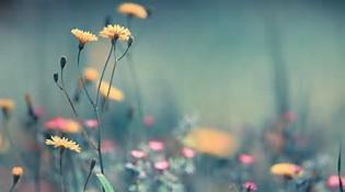 Full HD 1080P Spring Flowers