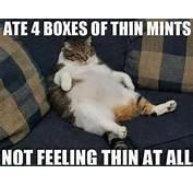 Thin Mints Not Feeling Cat Hilarious