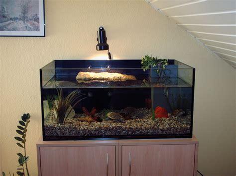 landschildkröten haltung in der wohnung aquarien und zubeh 246 r tieranzeigen seite 7