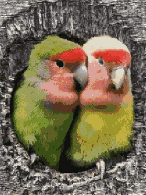 imagenes de love birds wepking com auto design tech