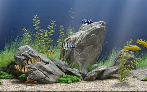 wallpaper aquarium bergerak  pc  aquarium ideas