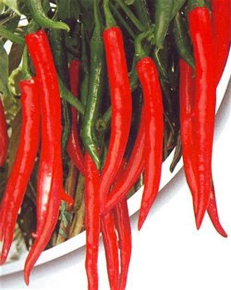 Benih Cabai Merah Besar lmga agro grosir belanja produk pertanian benih