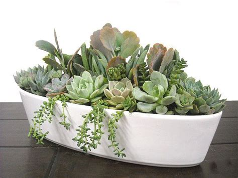 dish garden containers 180 best images about succulent window boxes containers