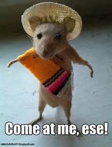 Funny animals pictures with funny text part 4 full n