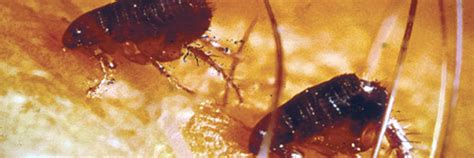 pest library raifsniders exterminating llc