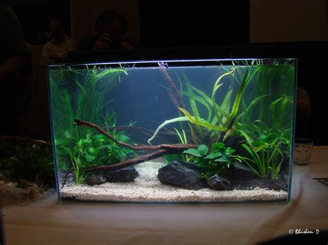 Aquarium Designs Home Design Aquascape Aquarium Design Ideas Aquascape