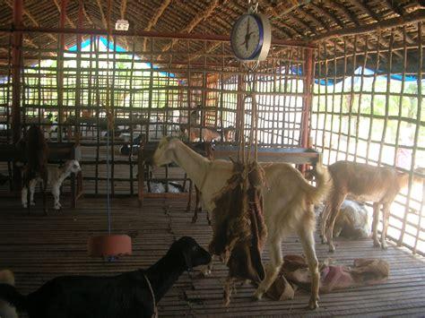 goat farm house design goat farm house design www imgkid com the image kid has it