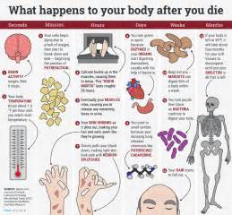 what happens to a human body after death business insider