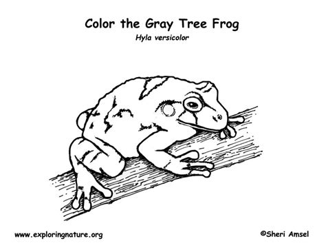coloring pages of tree frogs gray tree frog coloring page