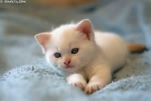 white_kitten1.jpg