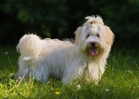 healthy breeds 30 healthiest breeds that live the
