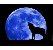 This Is The Colorful Blue Moon Wolf Full Wallpaper Background