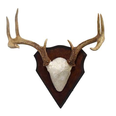 Deer Rack For Sale by Coues Deer Antler Rack Taxidermy Mounts For Sale And