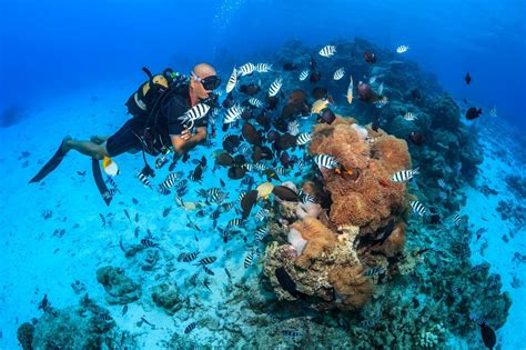 scuba diving  tahiti topdivetopdive