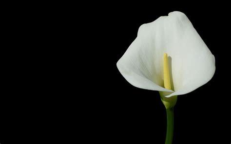 white flower images white flower weneedfun