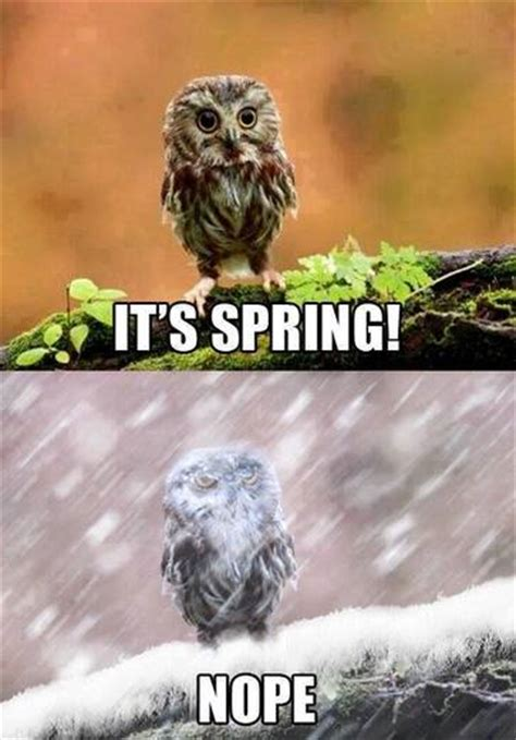 Spring Meme - news quot that s so true quot the best weather memes of 2014
