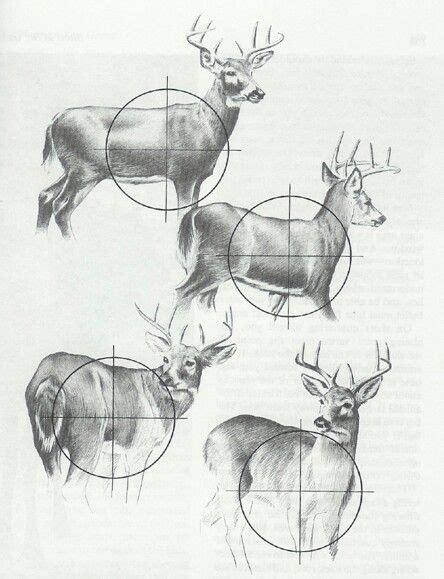 where to shoot a deer diagram deer diagram shooting outdoor etc