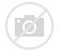foto kucing lucu keren terbaru putri