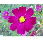 Flower Part 2  We Need Fun