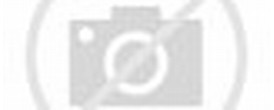 Deadmau5 Meowingtons Cat
