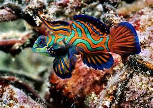 Aquarium fish species hd top 10 most beautiful and colorful fish