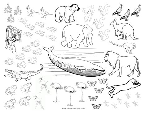animal coloring sheets animals coloring and counting activity sheet
