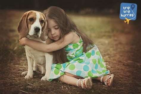 breeds for families the best breeds for children and families triptriphurray