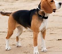 Imagenes De Un Perro