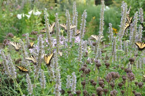 Plants For Butterfly Garden by Creating A Butterfly Garden Learning Initiative