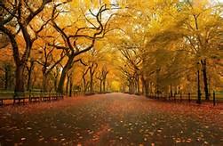 New York Central Park Fall