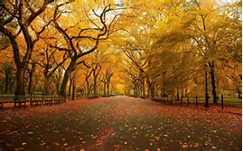 New York Central Park in Fall Season