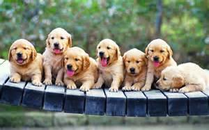 Dog puppies line wallpaper hd 1902 wallpaper high resolution
