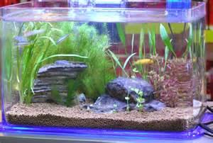 Aquarium   Natural Planted Tank (Walstad Method).: Nano Aquariums