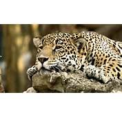 Wildlife Wallpaper Animals Images 1920x1080