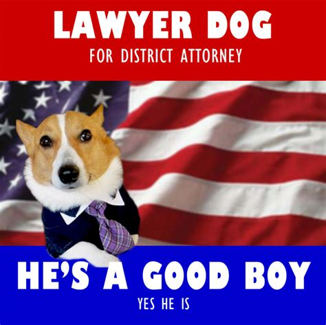 Corgi Lawyer Meme - meme round up lawyer dog brightestyoungthings dc