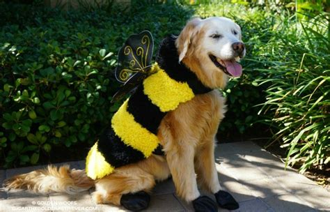 golden retriever costume top 5 costumes for golden retrievers that are simply awesome a s