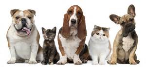 Clinic veterinarian in lake forest ca usa veterinary resources