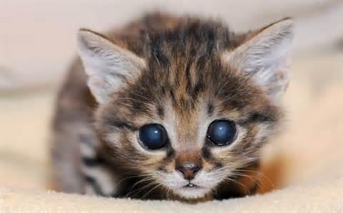 <strong>kitten</strong>_2182000k.jpg