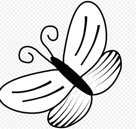 gambar sketsa kupu kupu terbang gambar mania