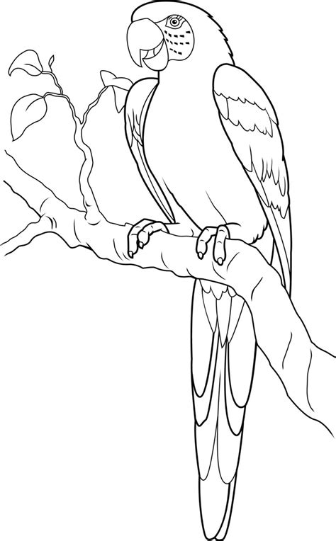 coloring pages of birds in the rainforest macaw google search rainforest animals pinterest