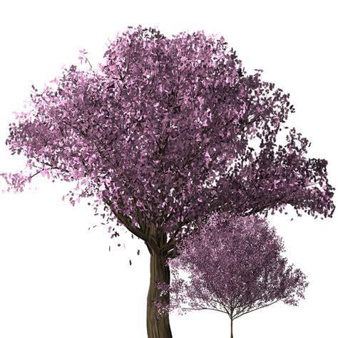 blossom trees free illustration cherry blossom tree cherry blossom