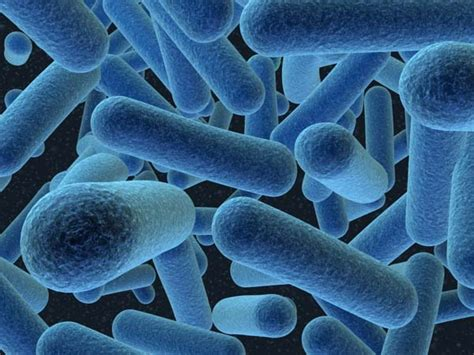 Diseases Caused By Microorganisms In Plants And Animals - g6 animals science wiki ahnaf