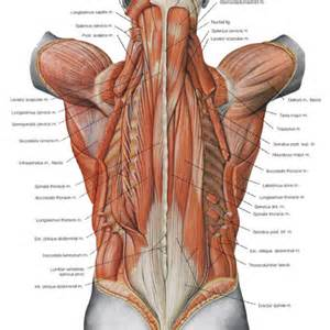 Male Human Body Parts » Home Design 2017