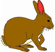Bunny Free Rabbits Clipart Graphics Images And Photos 3