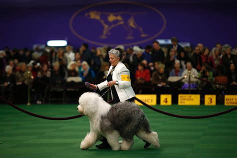 westminster show image gallery westminster show