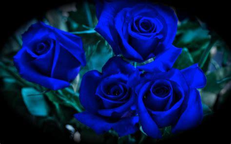 imagenes de rosas verdes y azules rosas azules buscar con google flores pinterest