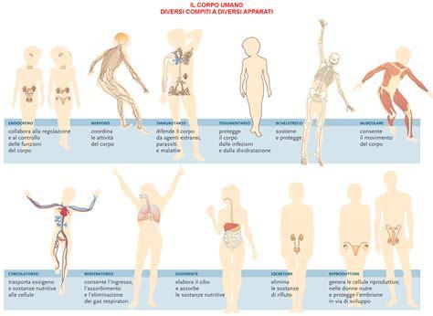 test muscolare i muscoli corpo umano immagini i muscoli corpo
