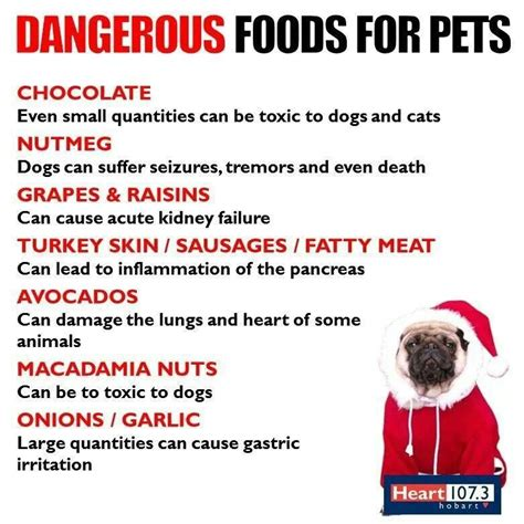 dangerous foods for dogs dangerous foods for dogs anything dobermans