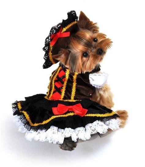 costumes for yorkies pirate costume yorkie yorkie and puppy costumes